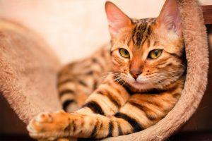 gato-post-1