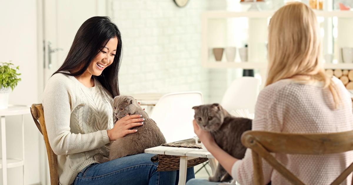 Women in a cat café